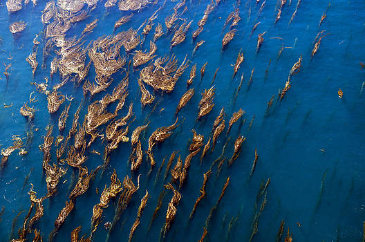 Kelp Forest from the Air by Greg Amptman