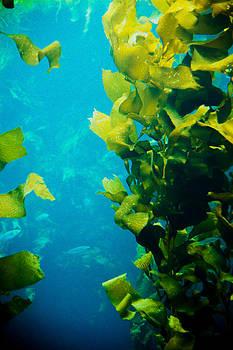 Kelp Three by SFPhotoStore