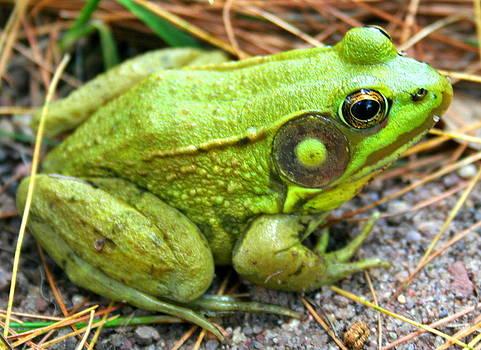 Kermit's Cousin by Stephen Melcher