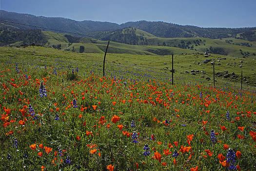 Susan Rovira - Kern County Spring