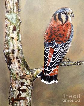 Kestrel by Amanda Hukill