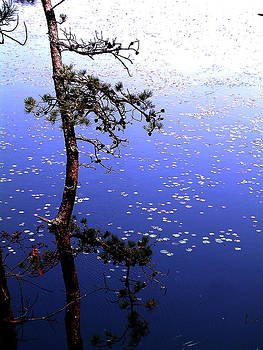 Kettle Pond with Tree by Mike McCool