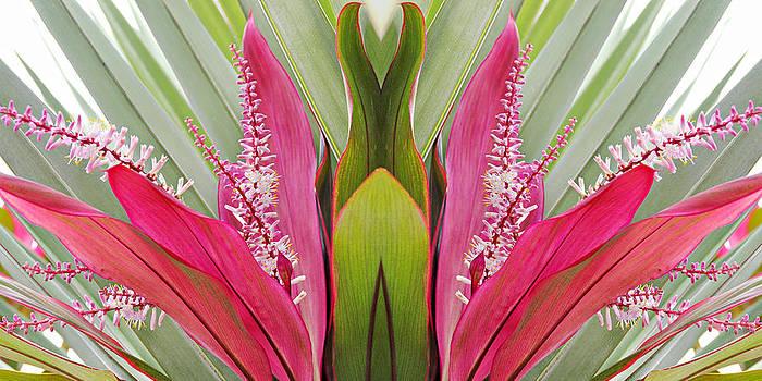 Simply  Photos - Key West Symmetry