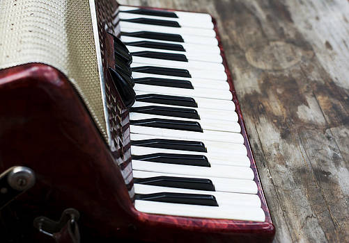 Newnow Photography By Vera Cepic - Keyboard of accordian
