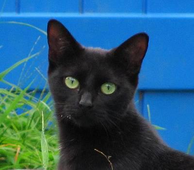 Kiddy cat by Daisy Morales