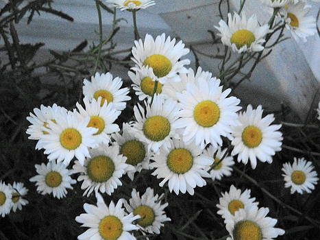 Kindergarten daisies by Suzanne Perry