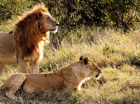Mauverneen Blevins - King and queen of the Serengeti