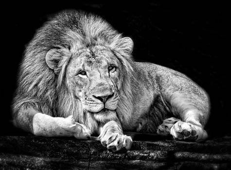 King at Rest by Jeff R Clow
