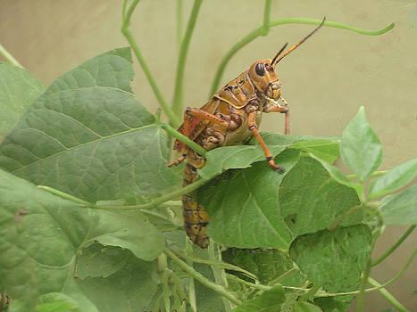 King Grasshopper by Joyce Blank