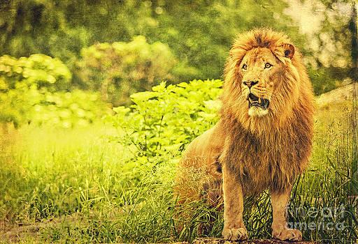 King Lion 2 by Izabela Kaminska