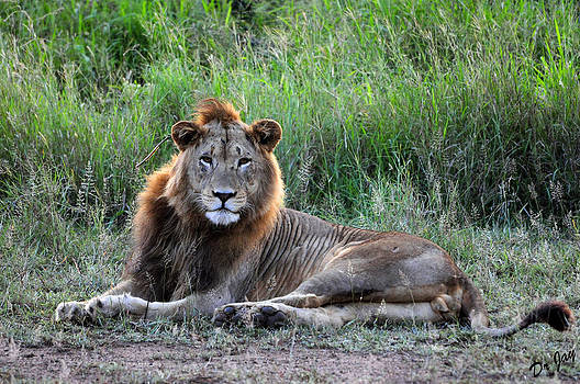 King of the Jungle by Jay Walshon MD