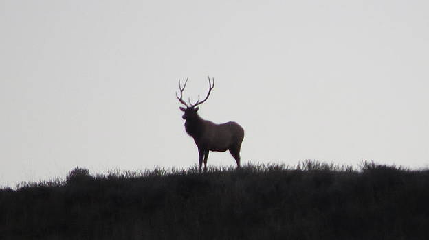 King of the mountain by Diane Mitchell