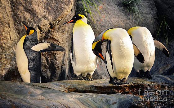 Rachel Barrett - King Penguins