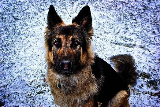 Frank J Casella - King Shepherd Dog