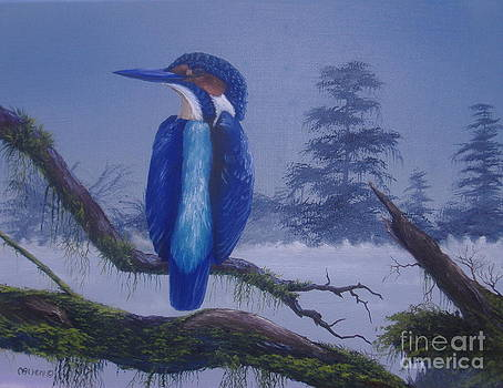 Kingfisher by Michael Allen