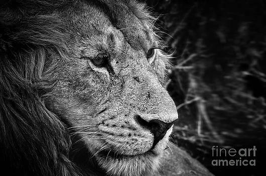 King's portrait by Alessandro Giorgi Art Photography