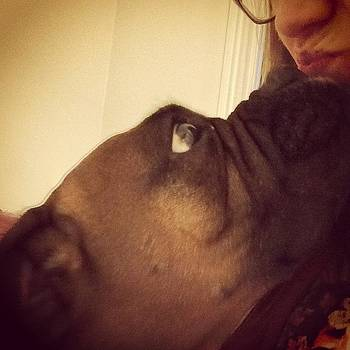 Kisses! #boxer #boxersarethebest by Samantha Rash
