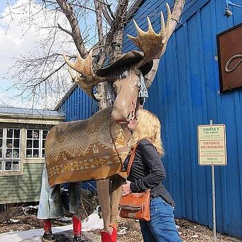 Kissing The Town Moose! by Susan Neufeld