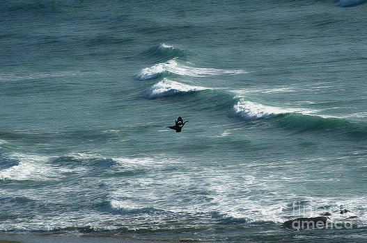 Kite on ocean by Nur Roy