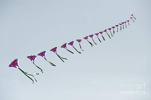 John Shaw - Kites in China