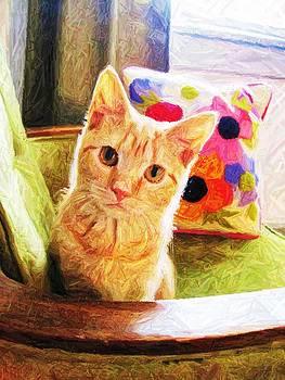 Kitten by Jennifer Randall