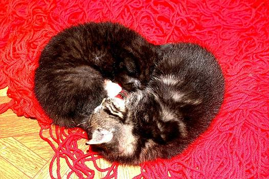 Kitten Love by Connie Ann LaPointe