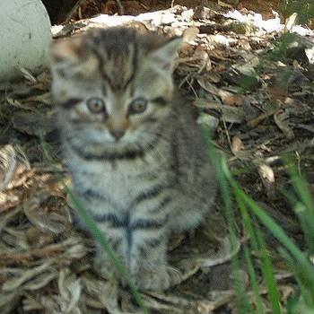 Kitten by Rebekah Martin