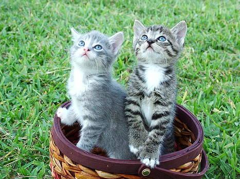 Kittens by Pavlo Kuzyk
