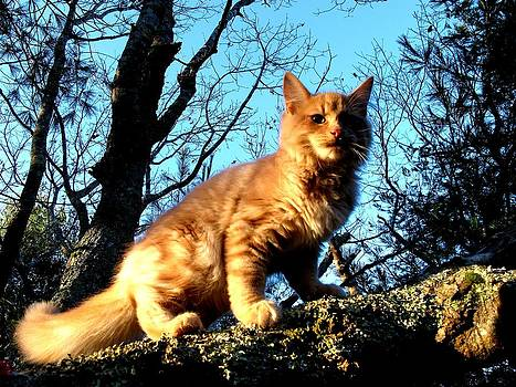 Kittery Cat by Donnie Freeman