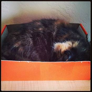 #kitty #cat #catinabox #silly #funny by Mandy Shupp