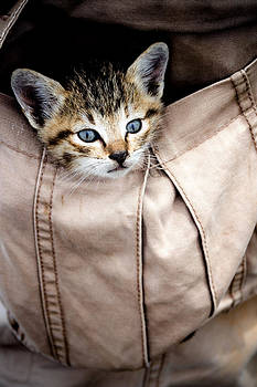 Kitty in the pocket by Frederiko Ratu Kedang