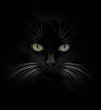 Kitty by Lori Hutchison