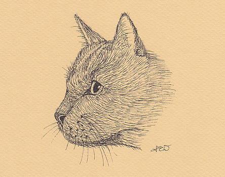 Kitty by Sara Davenport