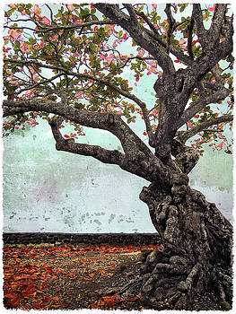 Daniel Hagerman - KNOTTED TREE