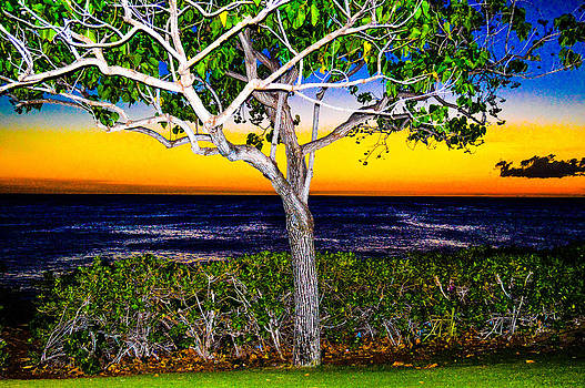 Ko Olina Tree in Sunset by Lisa Cortez