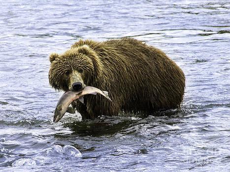 Tim Moore - Kodiak Catch