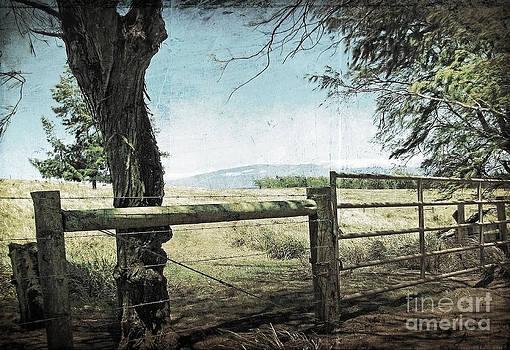 Ellen Cotton - Kohala Ranch