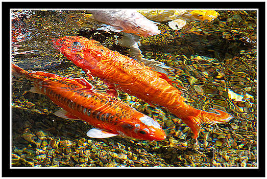 Koi Pals by Claudia Ellis