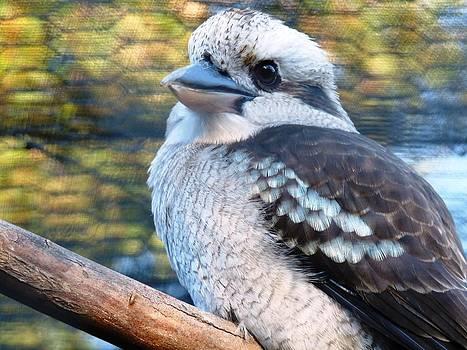 Kookaburra by Lynette McNees