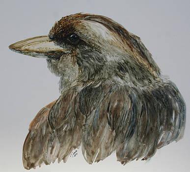 Kookaburra-young female by Jan Lowe