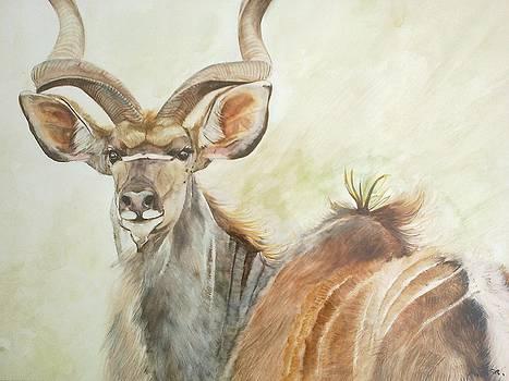 Kudu by Andrick Jean