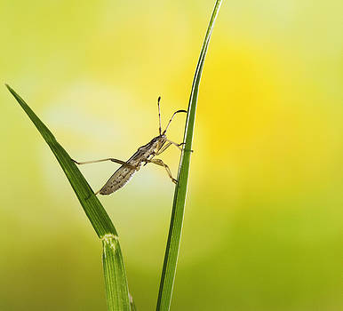 Kung Fu bug by William Freebilly photography