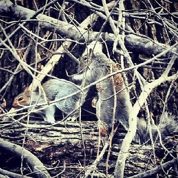 #kungfu #squirrels #wildlife #woods by Brian Harris