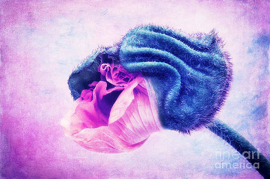Angela Doelling AD DESIGN Photo and PhotoArt - La fleur II