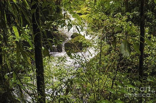 Bob Phillips - La Paz River and Rainforest