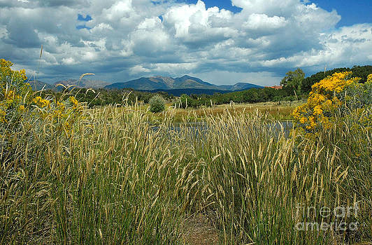 La Plata Mountains by Tina Osterhoudt