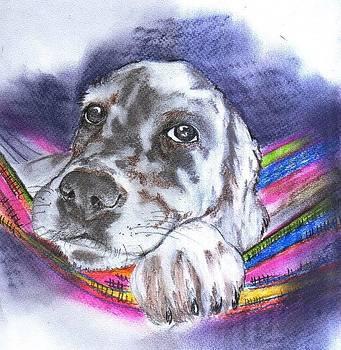 Labrador by Aida Novosel Savic
