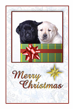 Waldek Dabrowski - Labrador Christmas Card