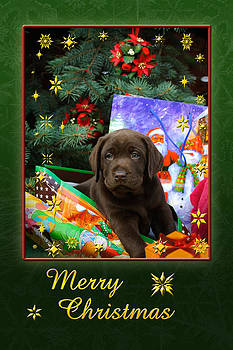 Waldek Dabrowski - Labrador puppy christmas card