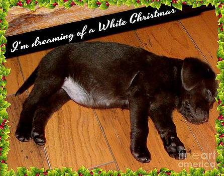 Gail Matthews - Labrador Puppy dreaming of Christmas